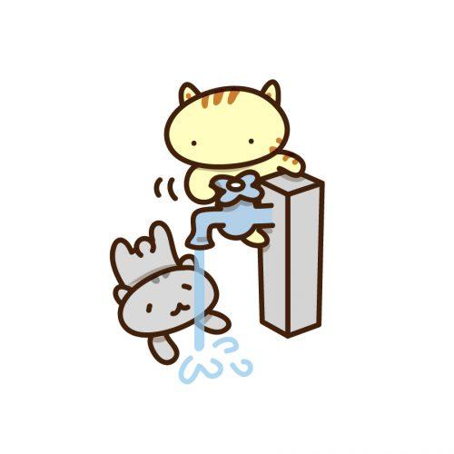 水分補給、水、ネコ