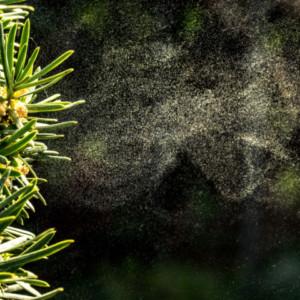 花粉時期、花粉対策、花粉症、スギ花粉、セルフケア、花粉、花粉症対策