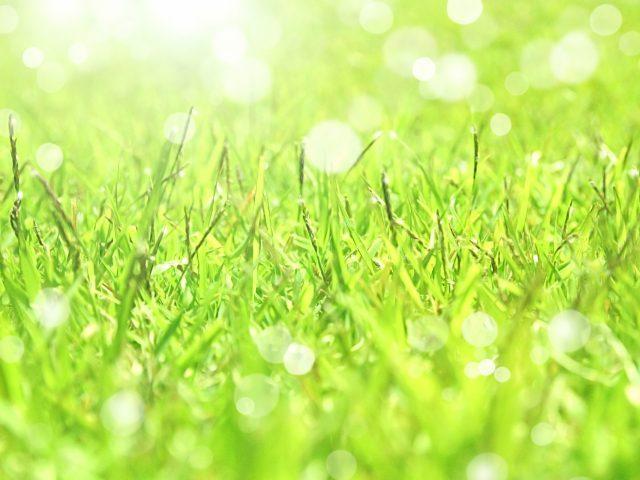 芝生、お手入れ、青々と茂る