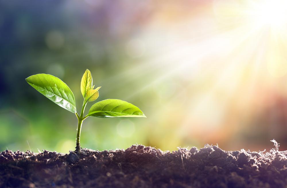 希望、望み、成長、進化、無限大