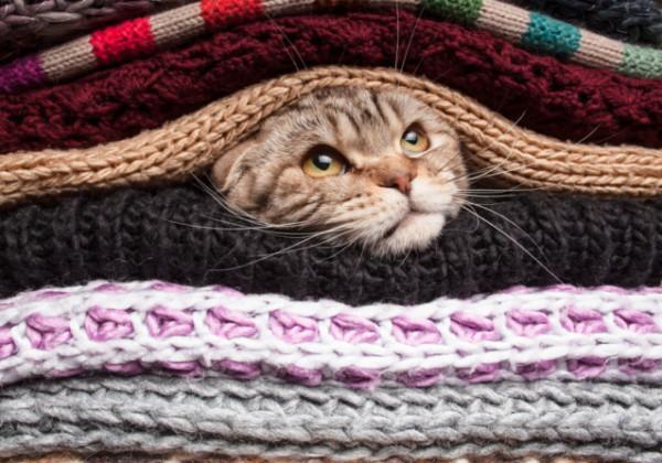 冬支度、ねこ、ネコ、ゆるい