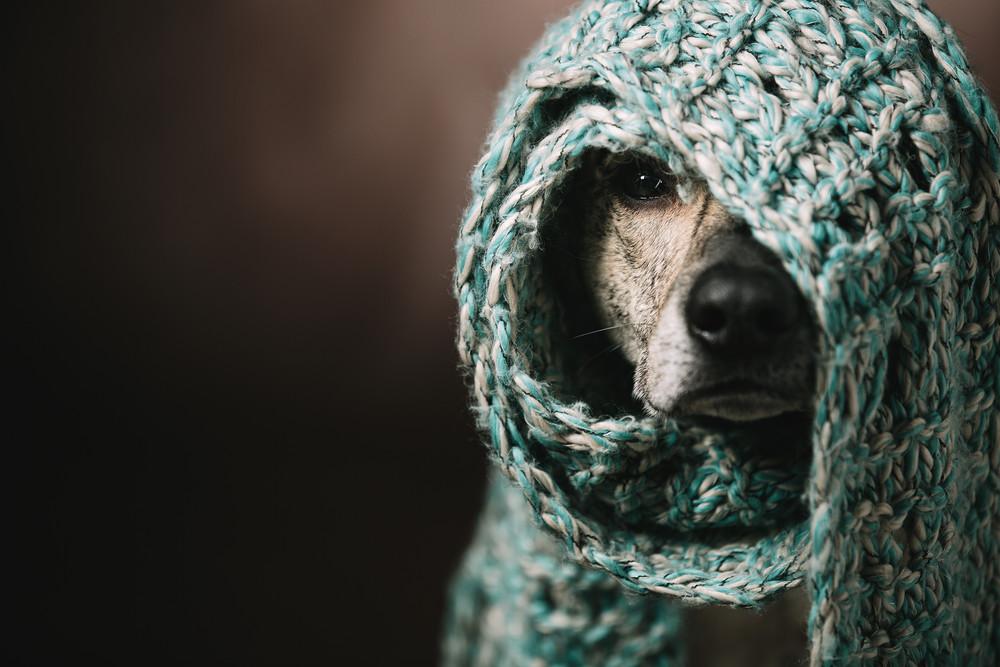 寒い、寒さ対策、防寒、マフラー、愛犬、ゆるい