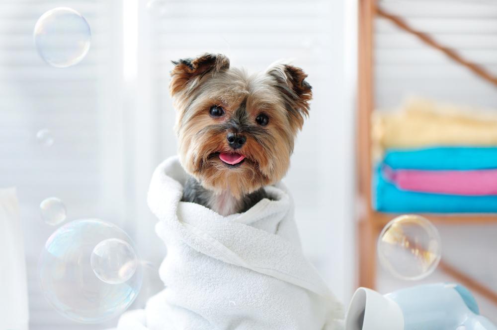 お風呂でリフレッシュ、入浴、リラックスタイム、バスタイム、バス、bass