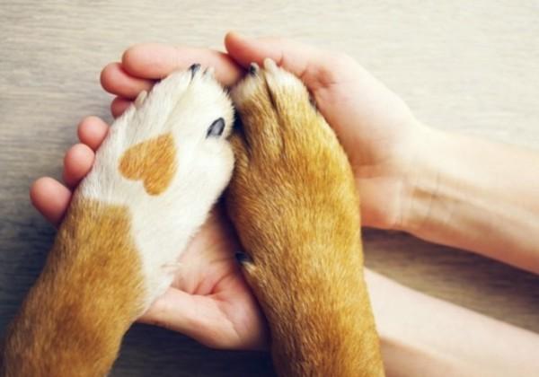 ペット、ペットの保険、犬、ワンちゃん、飼い犬、ペット、ペットは家族
