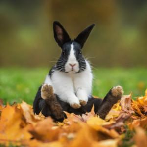 うさぎ、ウサギ、兎、うさぎイラスト