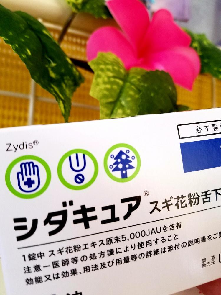 花粉症、シダキュア舌下錠、スギ花粉症、花粉症、花粉症根治治療