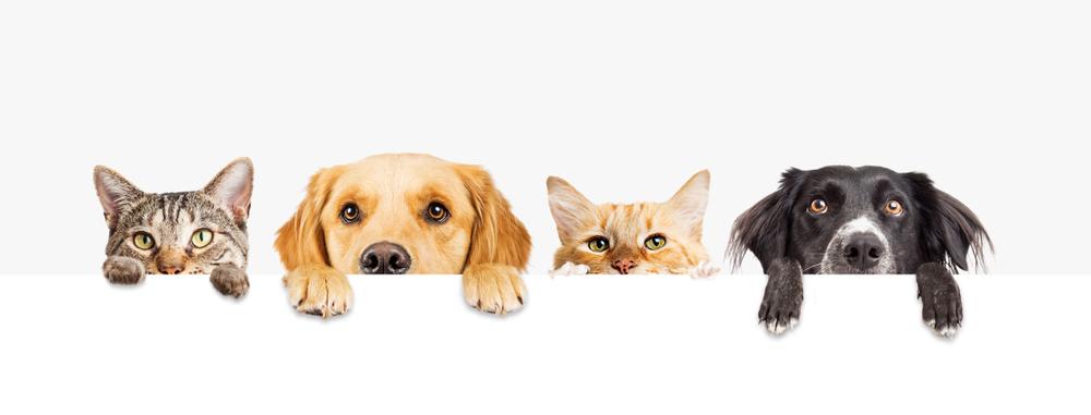 犬、猫、いぬ、ネコ、ペット