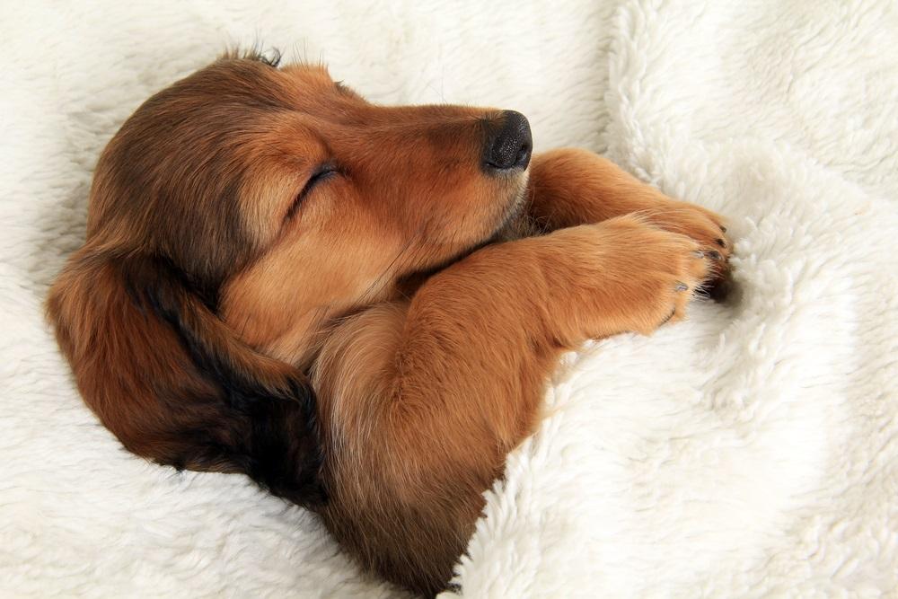 熟睡、睡眠、体内時計、副交感神経