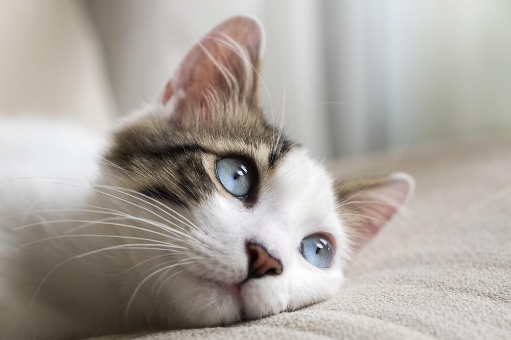ペット、猫、ペットロス、ペットロス乗り越え方、ペットロス症候群