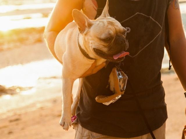 ペット、犬、ペットロス、ペットロス乗り越え方、ペットロス症候群