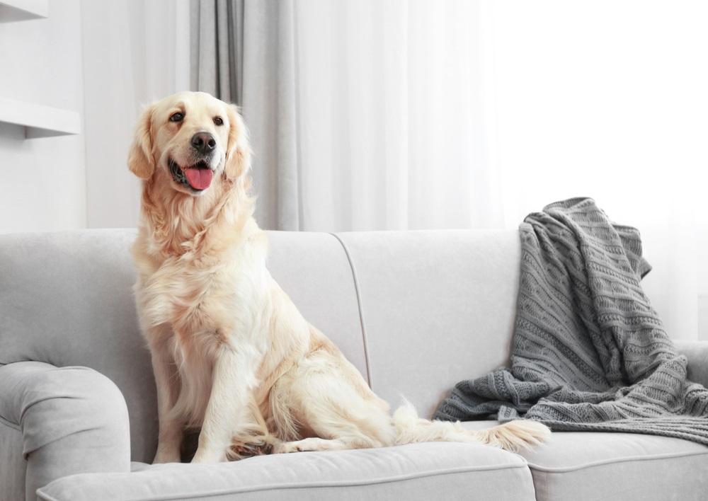 ペット、犬、ワンちゃん、いたずら、ペットのお留守番、お留守番