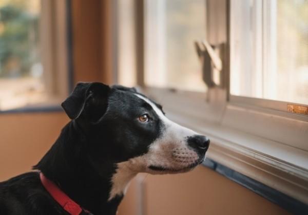 ペット、犬、ワンちゃん、飼い犬、ペットのお留守番、お留守番