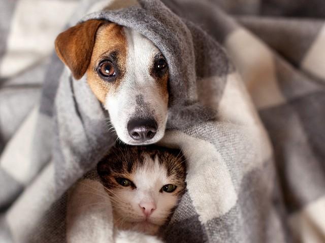 ヒートテック、寒さ対策、犬、猫